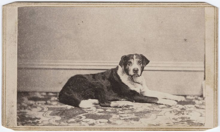 vintage dog pictures | Animal – Photo – Dog – (1) | Vintage Printable