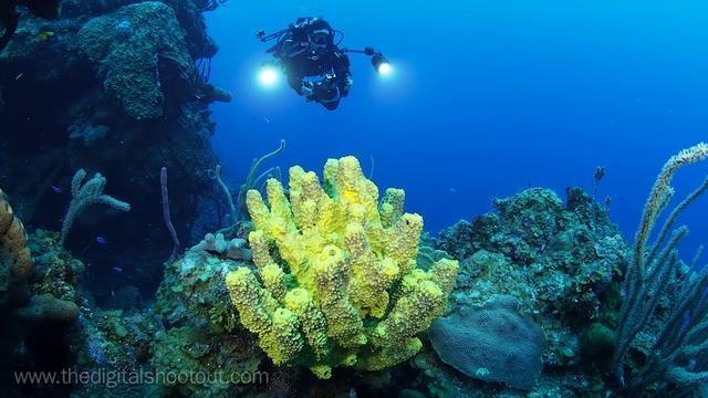 Olympus OM-D Underwater Video Tests - by Jim-Decker