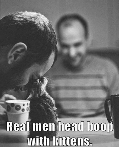 Yes, yes they do!!Cat, Head Boop, A Real Man, Headboop, Men Head, Real Men, Kittens, Realmen, Animal