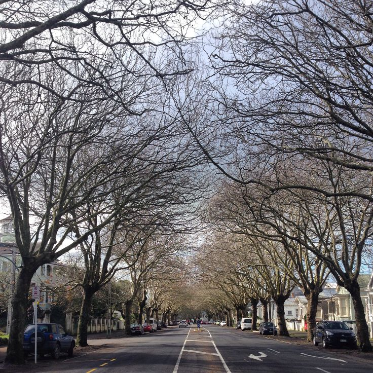 Franklin Road, Auckland, New Zealand
