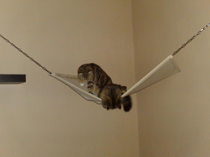 katzenhängematte selber machen | Die Augen einer Katze sind Fenster, die uns in eine andere Welt ...