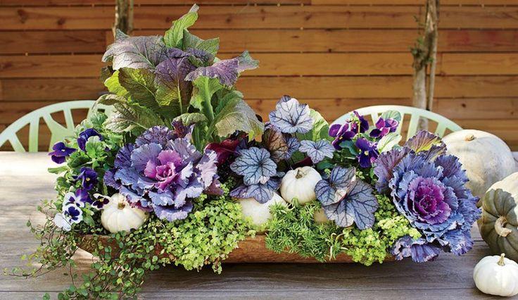 505 best Pflanzen images on Pinterest | Flower boxes, Nursing care ...