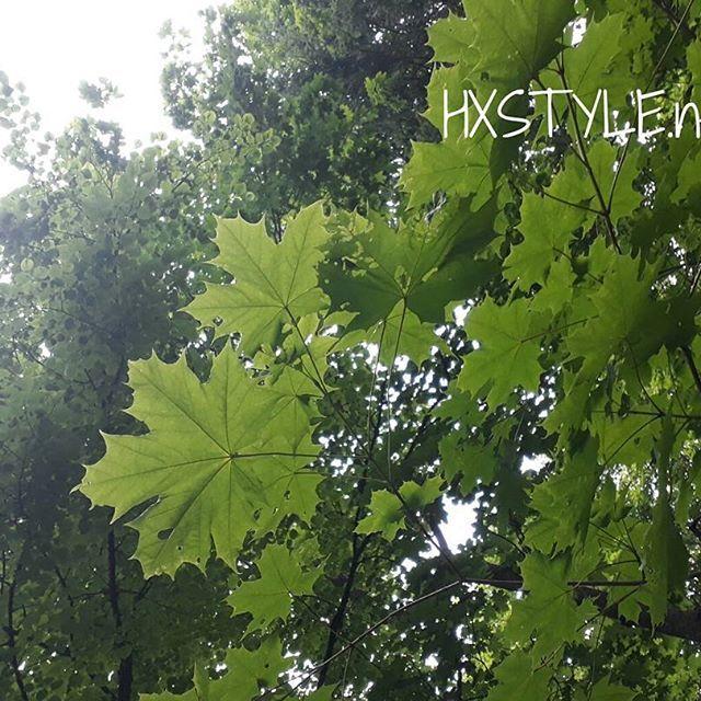 LUONTO. KESÄ  PUUT...Lehmus ja Vaahtera, Puistossa. Outo&pikainen Valo ilmiö, AURINKO Suomen Ainutlaatuinen Luonto ja Eläimet. Minun ELÄMÄNTAPA. Tykkään&Nautin. SUOSITTELEN. HYMY #elämäntapa #blogi #puut #puisto #luonto#suomi #ainutlaatuinen #metsä #ulkoilu ❤☺