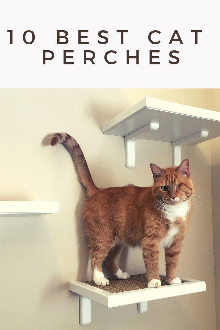 10 best cat perches cat accessories pet cat accessories
