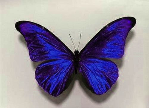 10 Beautiful 3D Sapphire Blue Sparkling Wedding Bedroom Butterflies Flower- Table Decorations on Etsy, $21.00