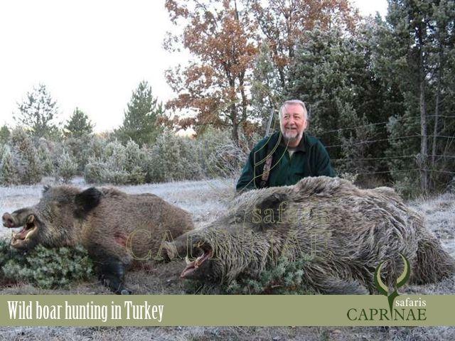 Wild boar hunting in Turkey http://riflescopescenter.com/category/nikon-riflescope-reviews/