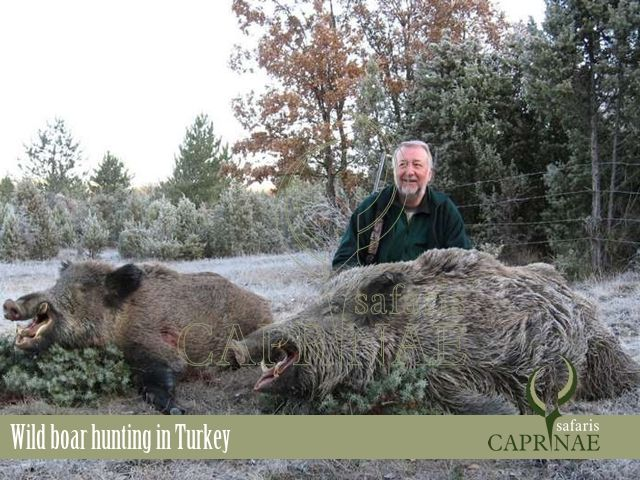 Wild boar hunting in Turkey http://riflescopescenter.com/category/nikon-riflescope-reviews/