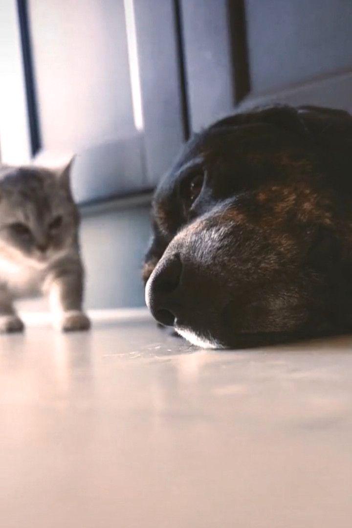 Sweet cat comforting her sad dog friend 🐶💕😘
