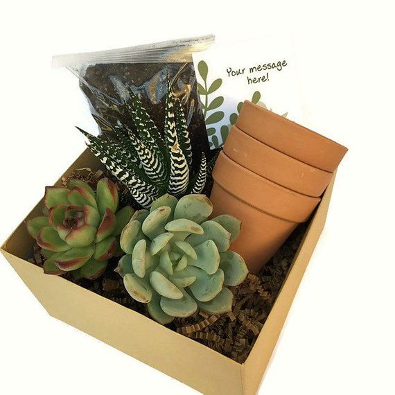 Happy Birthday Succulent Gift Box Send A Gift Terra Cotta Pots