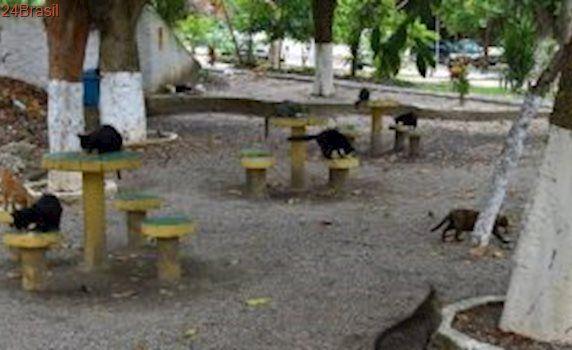 Mulher que cuida de 40 gatos enfrenta problemas em condomínio de Niterói