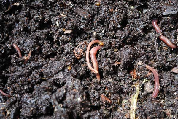 #Troubleshooting worm bins for composting
