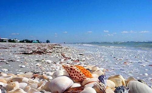 Sanibel Adası - Florida, ABD