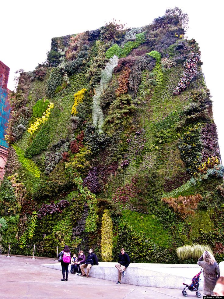 CaixaForum Madrid is a museum & cultural center in Paseo del Prado 36, Madrid. On the house next to it, there is a green wall designed by French botanist Patrick Blanc, called 'Real Jardin Botánico'