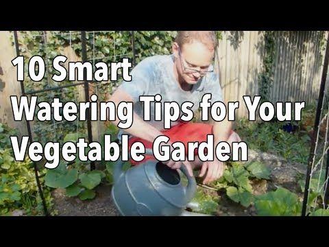 10 Smart Watering Tips for Your Vegetable Garden - YouTube