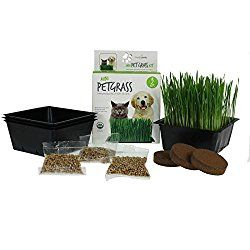 Mini Organic Pet Grass Kit – Grow Wheatgrass for Pets: Dog, Cat, Bird, Rabbit, More – Includes Trays, Soil, Wheat Grass Seeds, Instructions by Wheatgrass Kits (3 Kits)