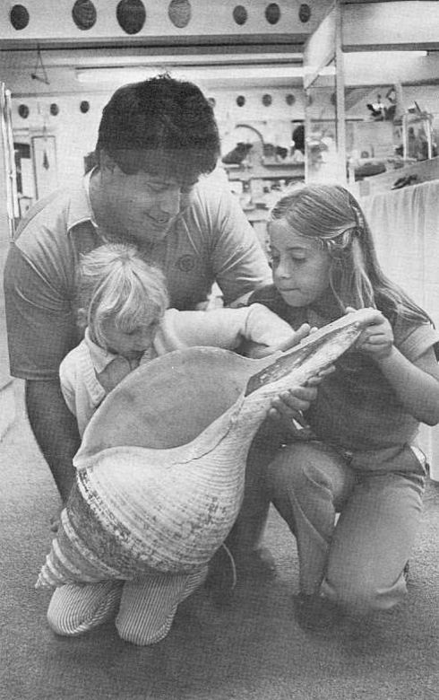 Syrinx araunus at 0.91 meters? From Hawaiian Shell News 1982 No. 7