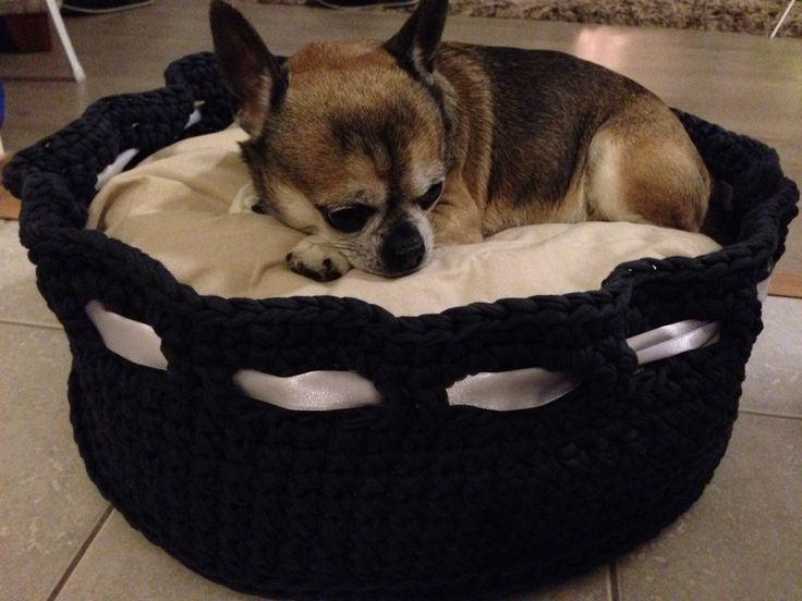 Basket for dogs / chihuahua