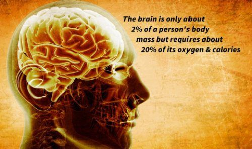 Fun science facts : theCHIVE