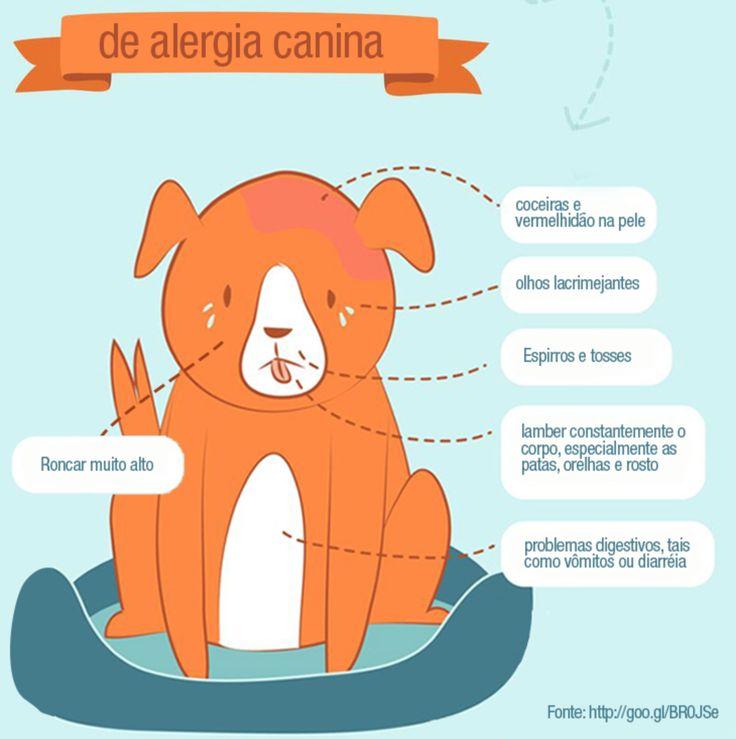 Dica Pet: 06 Sinais de Alergia Canina! #petmeupet #cachorro