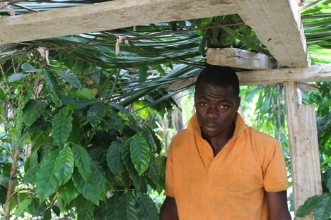 Dispatches from Origin: Growing Coffee in Haiti - Barista Magazine