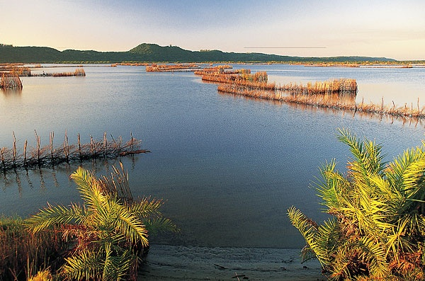 Traditional fish traps in the Kosi Bay nature reserve