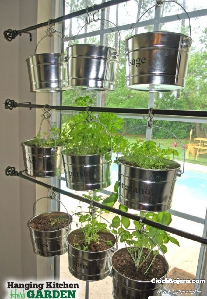 Zioła hodowane w kuchni