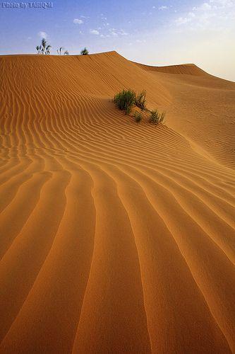 Desert Sand  by Tariq M. on Flirck