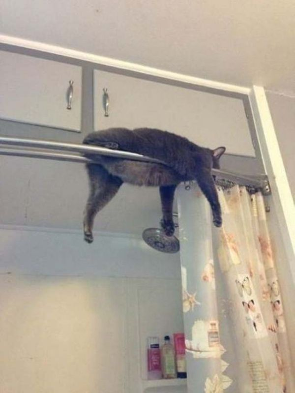 20 cats who have no idea what to do with their life