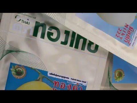 dua le milky 222 Thái Lan Việt Nam www thongthaiseeds,com
