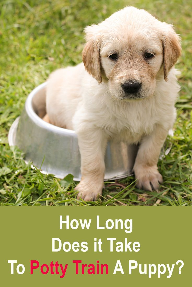 How Long Does It Take To Potty Train A Puppy Training Your Dog