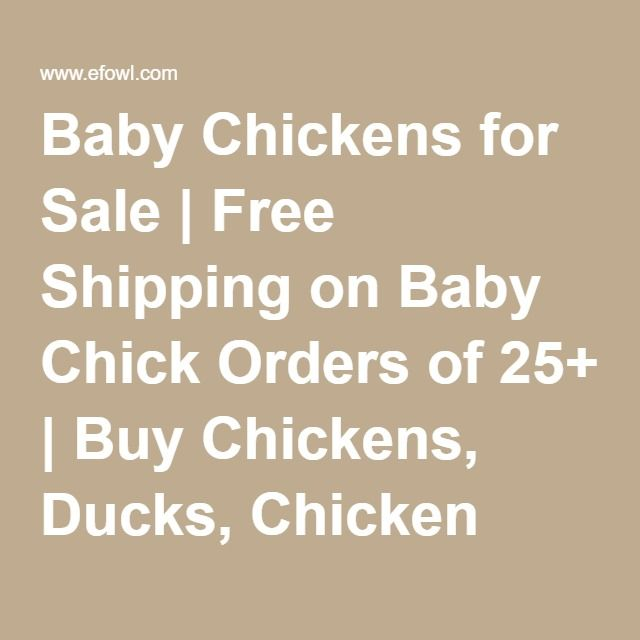 Baby Chickens for Sale | Free Shipping on Baby Chick Orders of 25+ | Buy Chickens, Ducks, Chicken Coops, Organic Chicken Feed