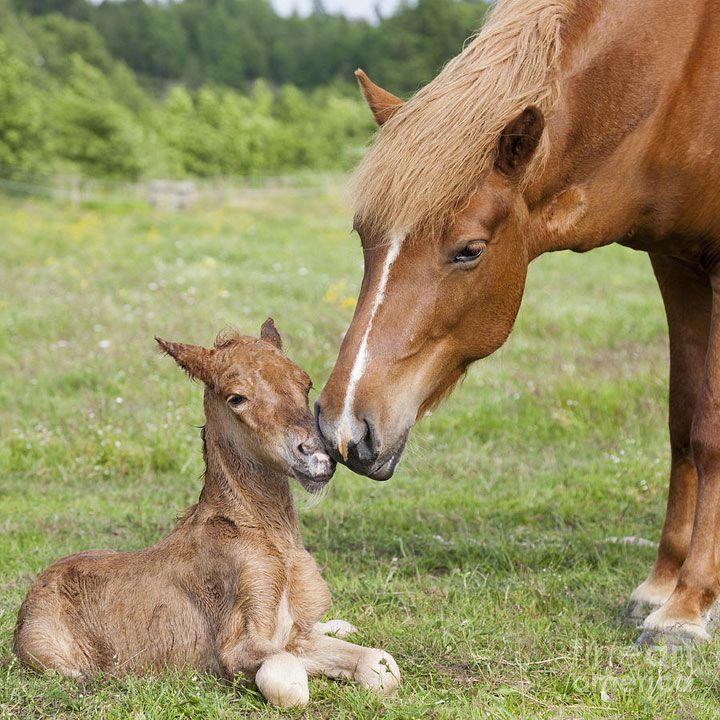 39 bébés animaux parmi les plus craquants du monde qui ...