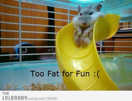Funny Pix - Revived! :) | MyFitnessPal.com