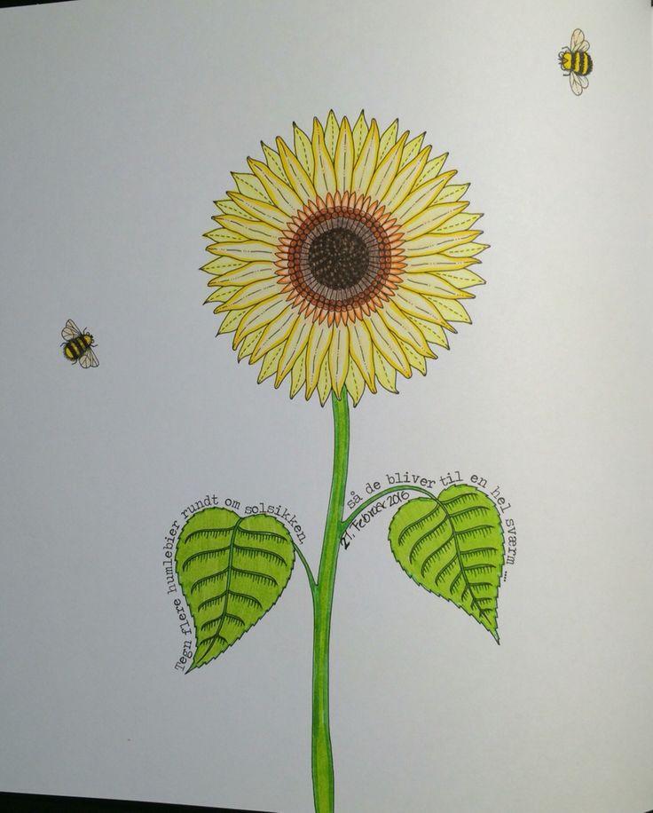 Sunflower and Bees From Johanna Basfords 'secret garden'