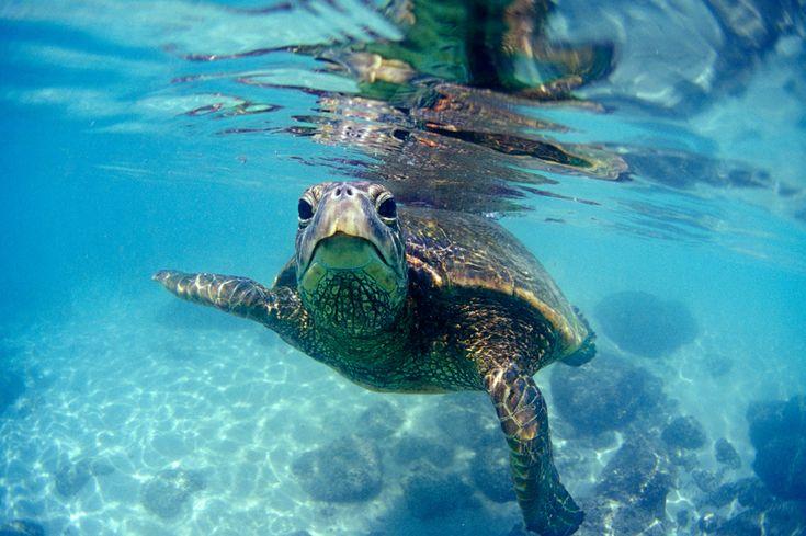 Hawaii. I want to meet this friendly Hawaiian sea-turtle