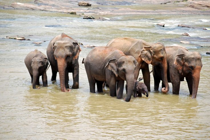 Elephants - Sri Lanka - http://www.travelmoodz.com/en/destination/sri-lanka