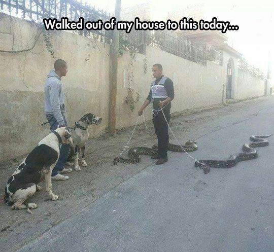 I can't even... But kudos to this guy for giving his snakes some exercise, and the other guy for having well-trained dogs.