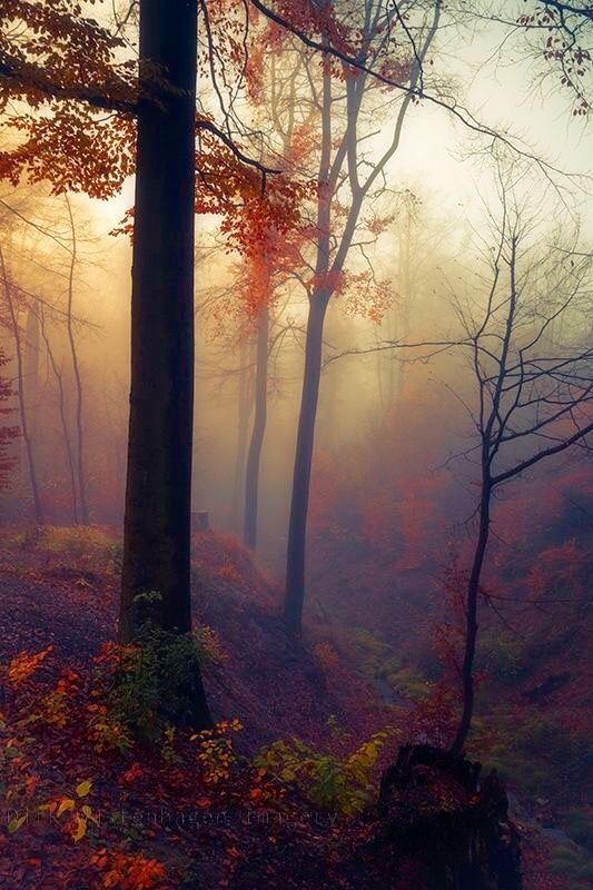 812 best images about In the Woods on Pinterest | Trees ...