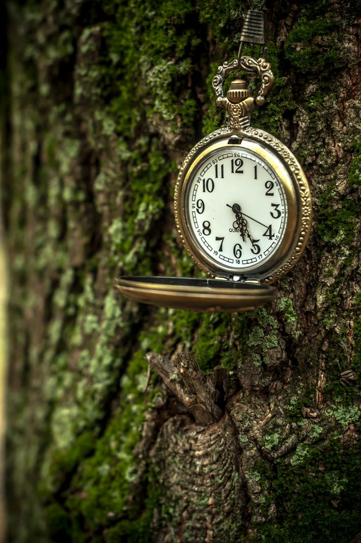 Clocks were hanging off of trees everywhere. the constant tick tock tick tock tick tock slowly driving her insane.