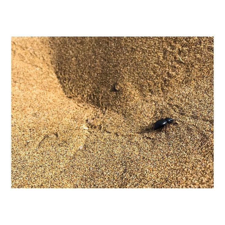 Deambulando en el desierto  Wandering in the dessert #desierto #dessert #fusca #bug #escarabajo #beetle #time #aventuras #good #viajes #day #adventure #hora #sand #beach #imarchi #photography #fotografia #fotografomadrid Originally posted in Instagram http://ift.tt/2r0CDYR on June 06 2017 at 07:42AM Deambulando en el desierto  Wandering in the dessert desierto dessert fusca bug escarabajo be imarchi imarchi.com photographer fotografo Madrid Spain photography photo foto iphone Phoneography…