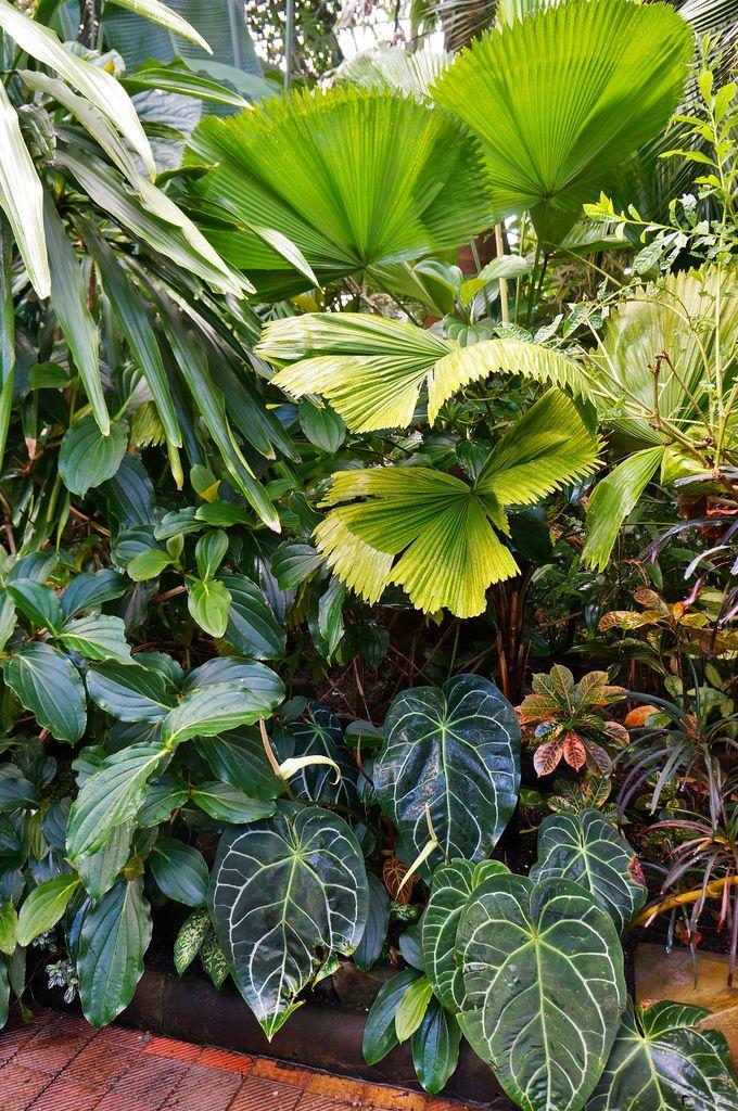 Die 25+ Besten Ideen Zu Tropischer Regenwald Auf Pinterest ... Garten Ideen Tropisch Exotisch Bilder