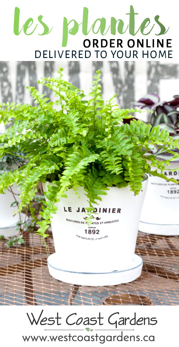Order your indoor (and outdoor) plants online and have them carefully delivered to your home! Shipped throughout the BC Lower Mainland. - West Coast Gardens - www.westcoastgardens.ca #succulent #plants #garden #homedecor #onlineshopping #shoponline #homedecor #BC #shopbc #vancouver #langley #surrey #GVRD #Canada #shopcanada #canadashopping