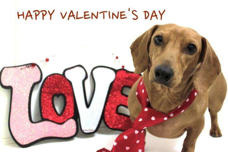 dog valentines day card sayings