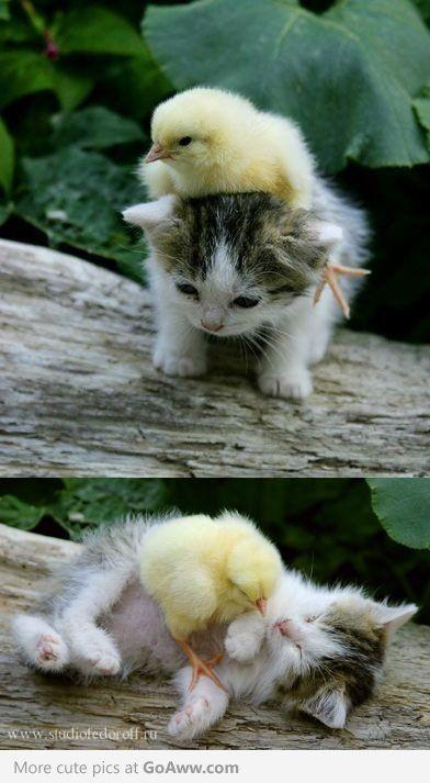 fluffy!!!! <3 <3 <3 <3 <3