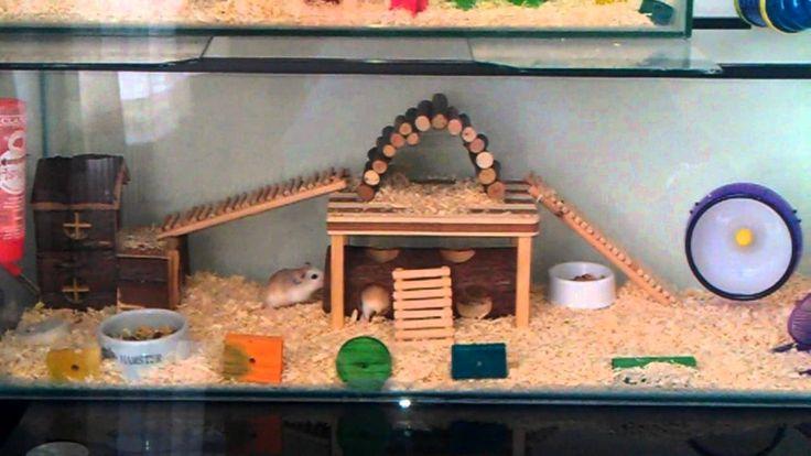 Set Up a Hamster Cage Creative, Habitats and Creative ideas