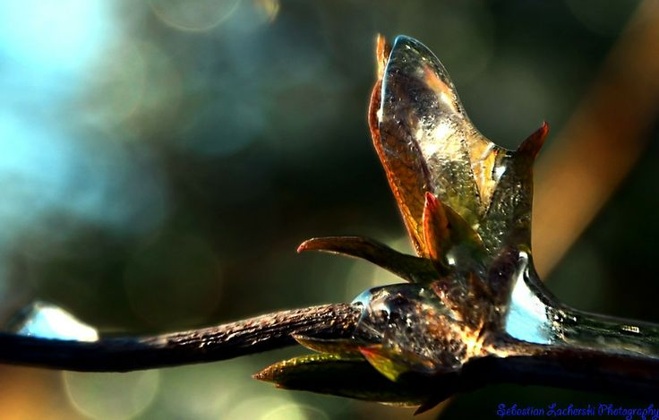 leaves. Frozen, drop of water by Sebastian Lacherski on 500px