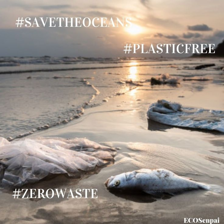 Plastic free ocean start caring for our environment start with yourself and your home – ECOSenpai