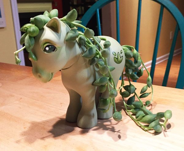 Decrepit old MLP into a tiny planter. WANT!