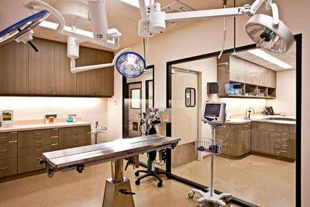 1431 Best Veterinary Technician Images On Pinterest Hospital Design Vet Med And Vet Office
