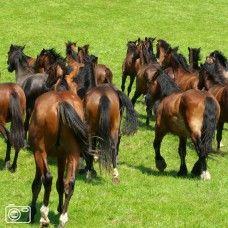 Groep paarden op drift in een zomerse wei